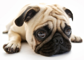 dog online booking
